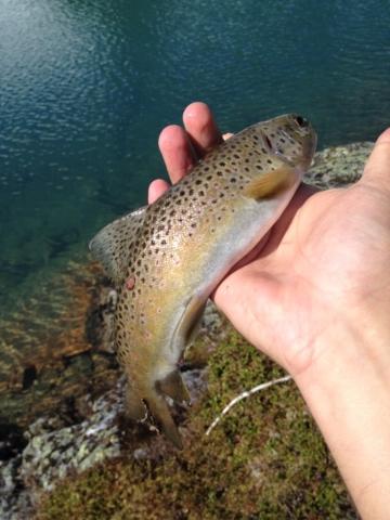 Fiske i Raunsdalen